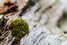 Moss on deadfall