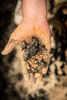One handful of ash